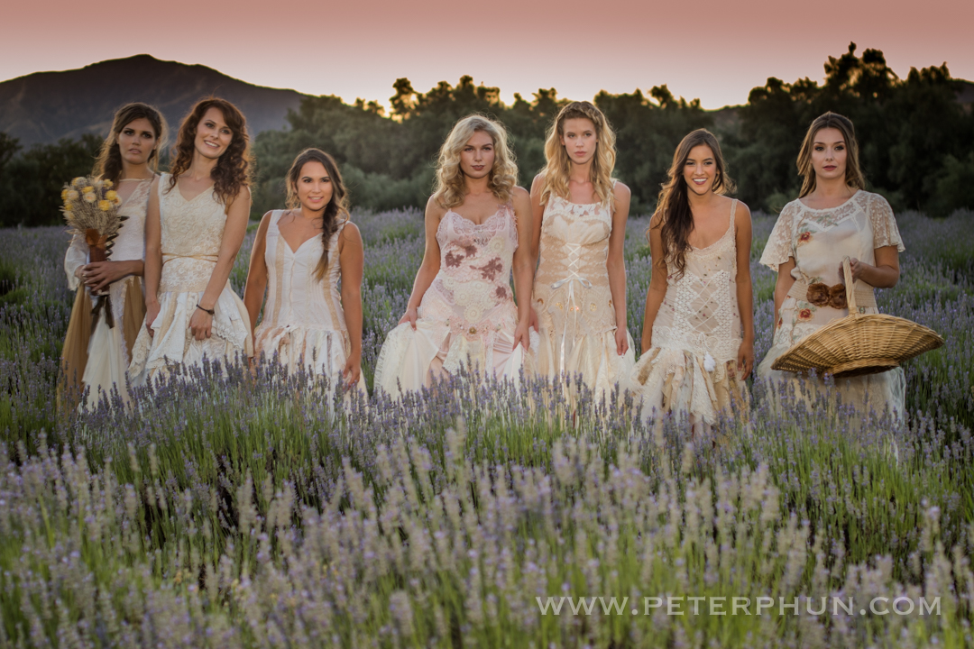 Beauties amongst the lavender